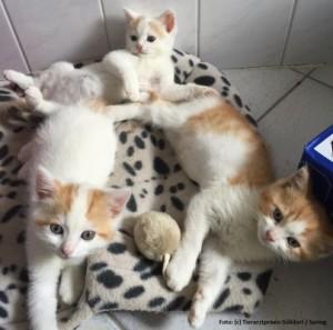 Katze Gruppe