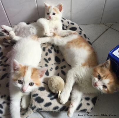 katzen frei laufen lassen