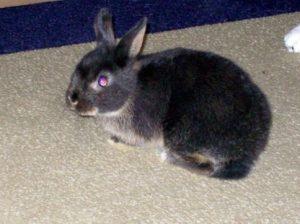 Kaninchen richtig halten_2