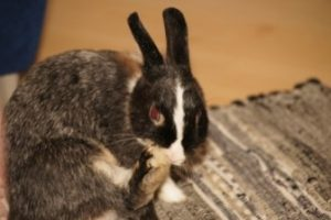Kaninchen richtig halten_3