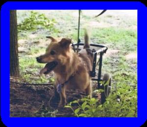 Scotty, Annes erster Rolli-Hund und Namensgeber des Vereins