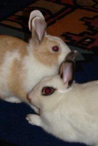 Kaninchen richtig halten_1